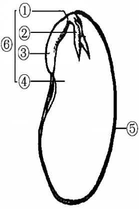 根据大豆种子的部分结构示意图,回答下列问题.