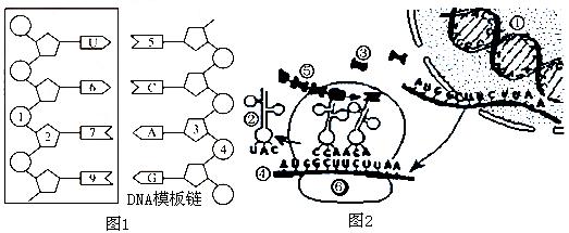 电路 电路图 电子 原理图 523_215