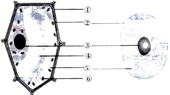 如图是动,植物细胞结构比较图,请据图回答下列问题.