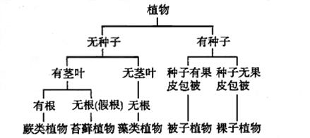 生物分类是研究生物的一种基本方法,分类主要依据的是生物在形态,结构