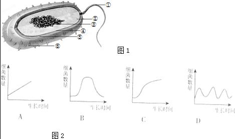 如图1是某种细菌的结构示意图,请根据图回答下列问题