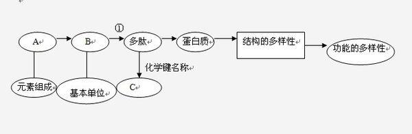 下面表示有关蛋白质分子的简要概念图,对图示分析正确